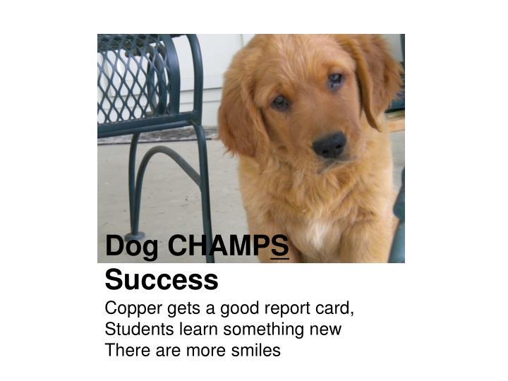 Dog CHAMP