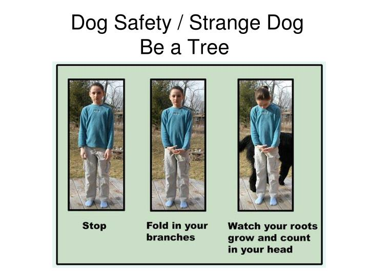 Dog Safety / Strange Dog