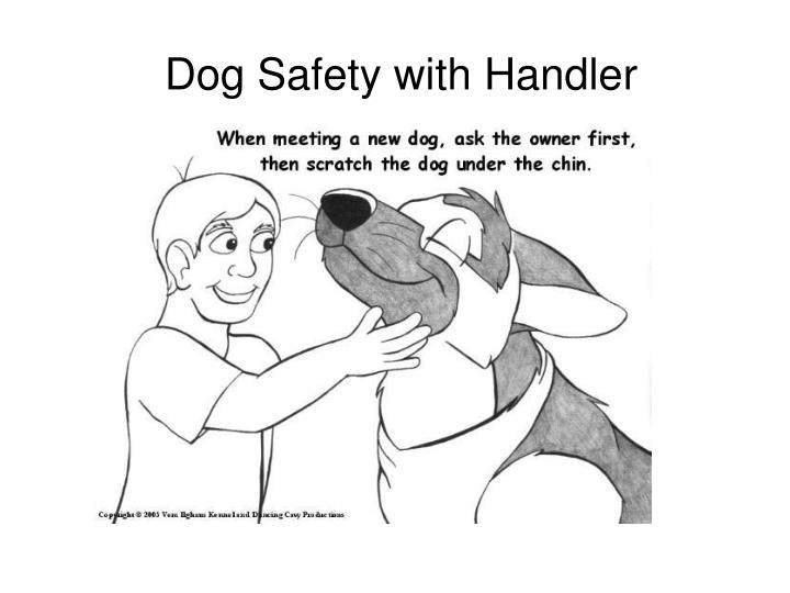 Dog Safety with Handler