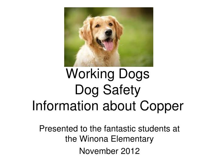 Working dogs dog safety information about copper