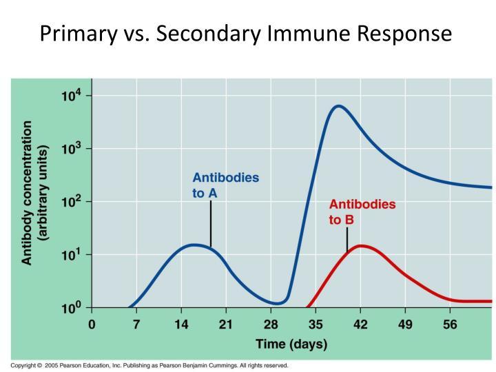 Primary vs. Secondary Immune Response