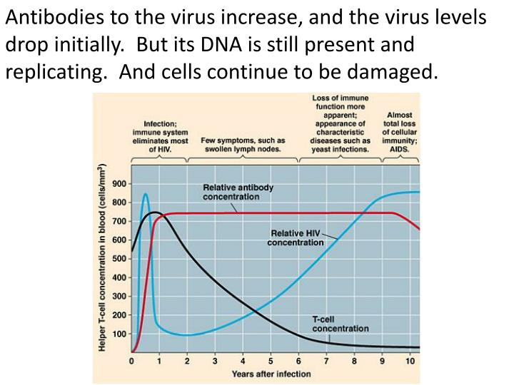 Antibodies to the virus increase, and the virus levels drop initially.  But