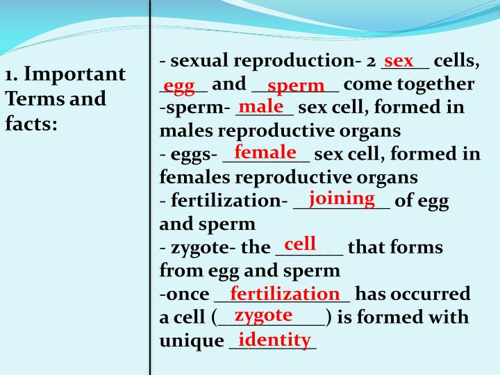 - sexual reproduction- 2 _____ cells, _____ and _________ come together