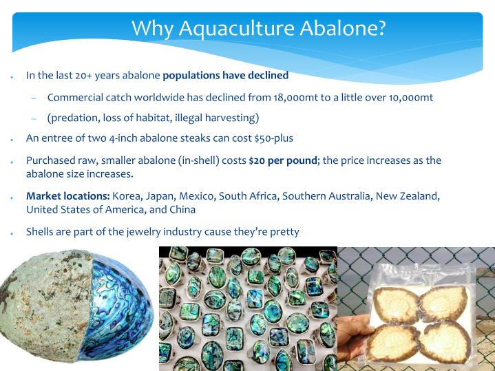 Why Aquaculture Abalone?