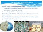 why aquaculture abalone