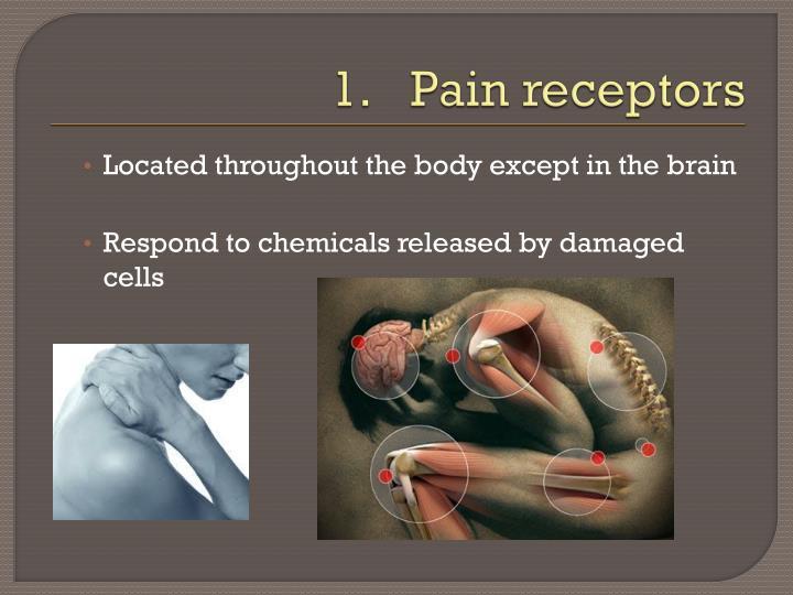 Pain receptors