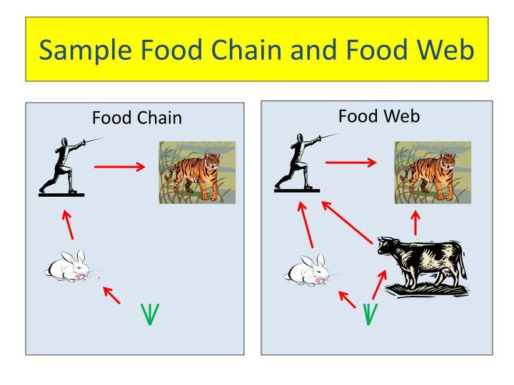 Sample Food Chain and Food Web