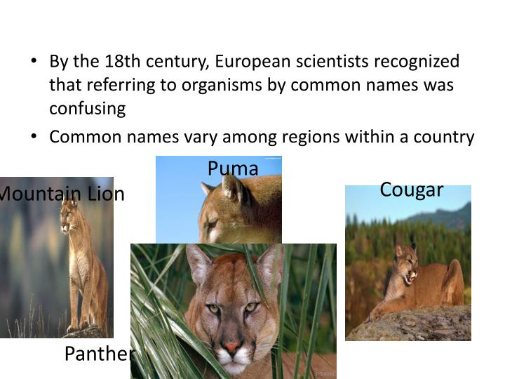 By the 18th century, European scientists recognized that referring to organisms by common names was confusing