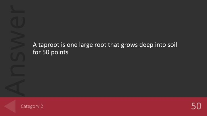 A taproot is one large root that grows deep into soil for 50 points