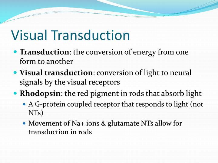 Visual Transduction