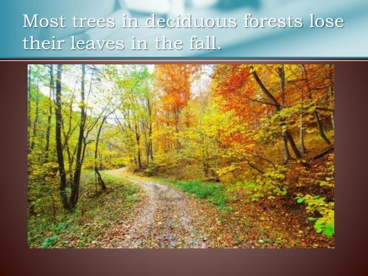 Most trees in deciduous forests lose their leaves in the fall.