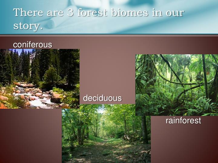 There are 3 forest biomes in our story