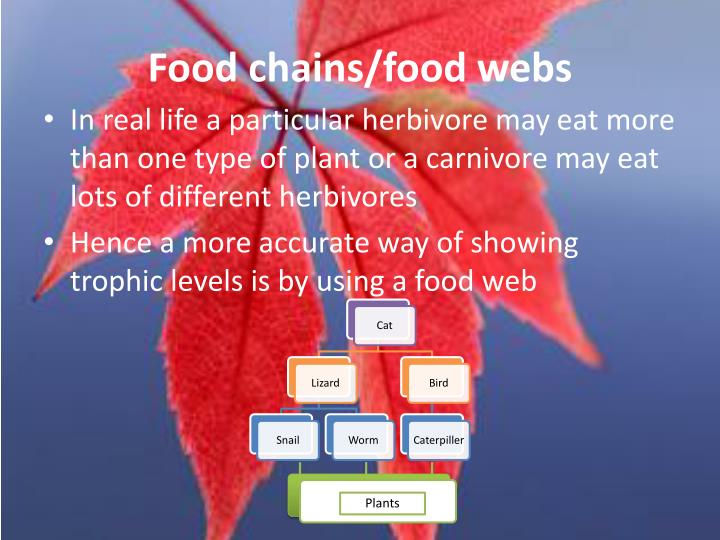 Food chains/food webs