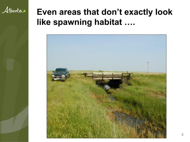 Even areas that don't exactly look like spawning habitat ….