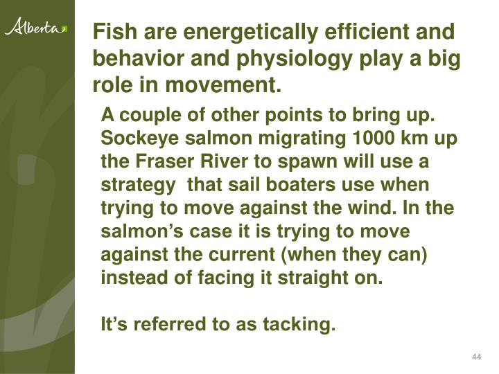 Fish are energetically efficient and behavior and physiology play a big role in movement.