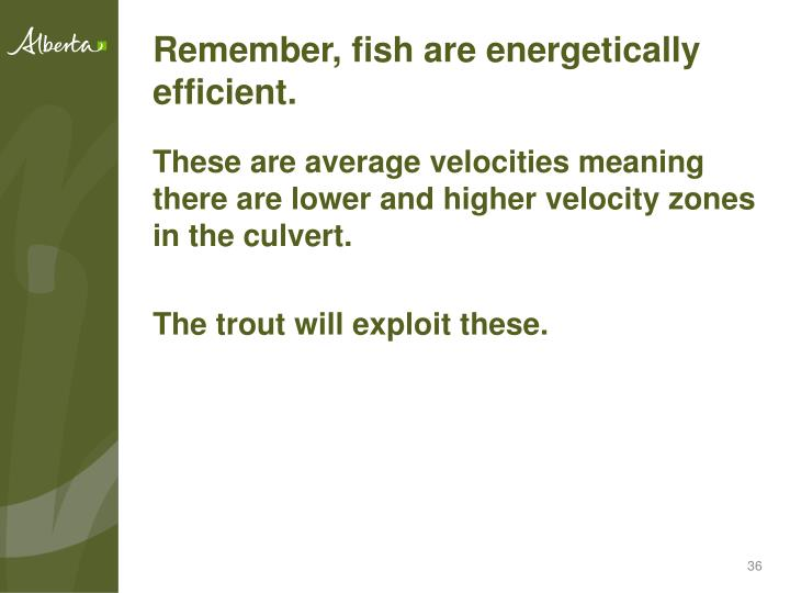 Remember, fish are energetically efficient.