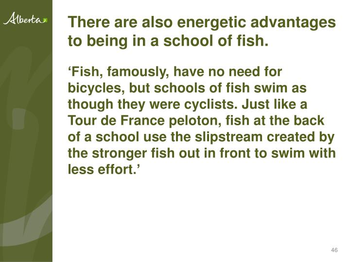 There are also energetic advantages to being in a school of fish.