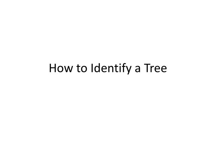 How to identify a tree