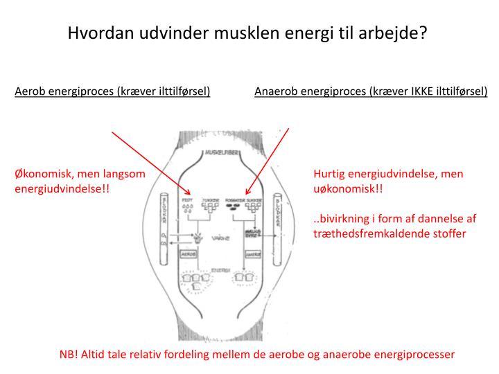 Hvordan udvinder musklen energi til arbejde?
