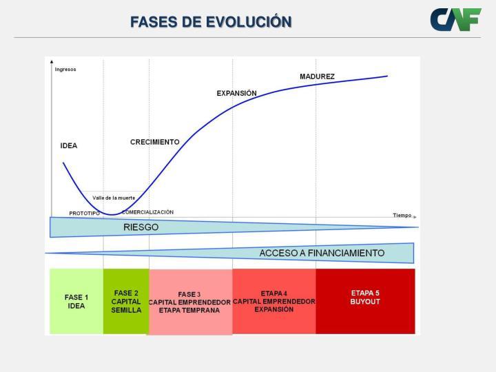 FASES DE EVOLUCIÓN