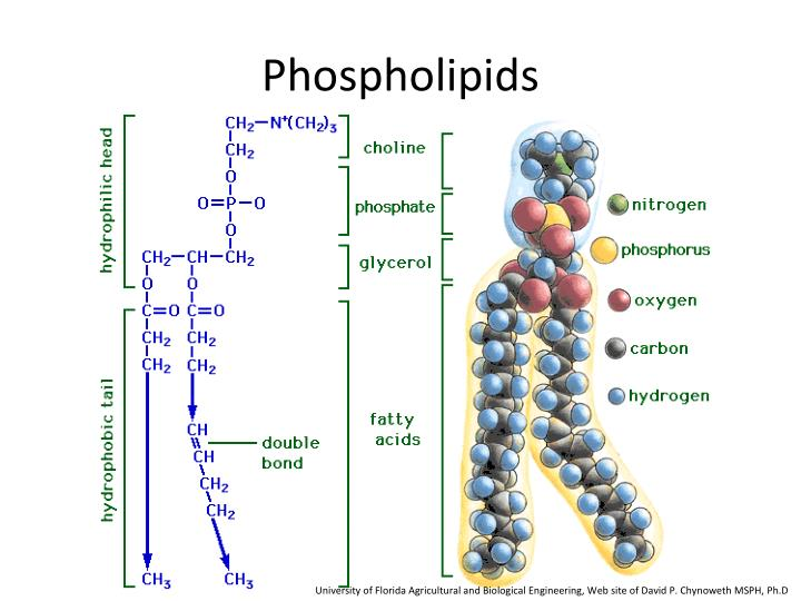 lipids fats phospholipids waxes and steroids