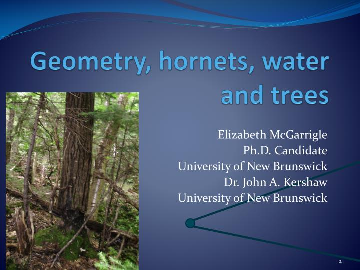 Geometry hornets water and trees