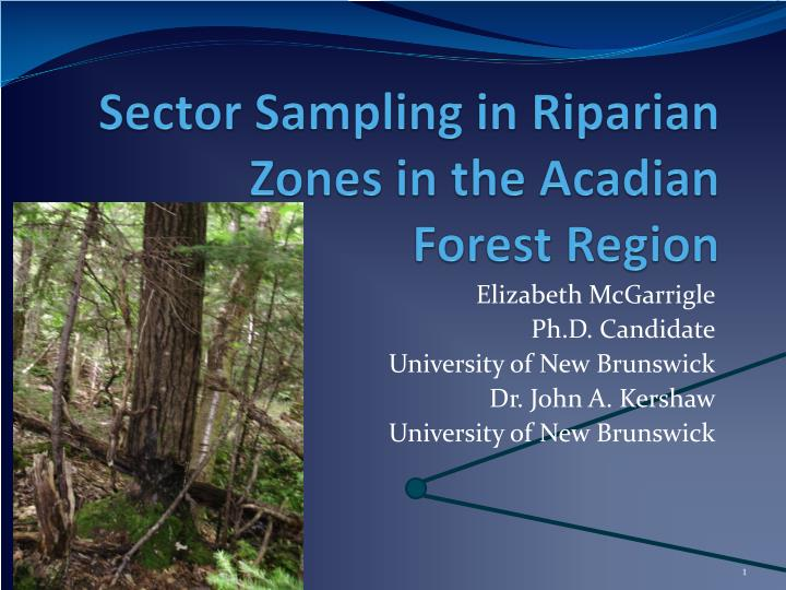 Sector sampling in r iparian zones in the acadian forest region