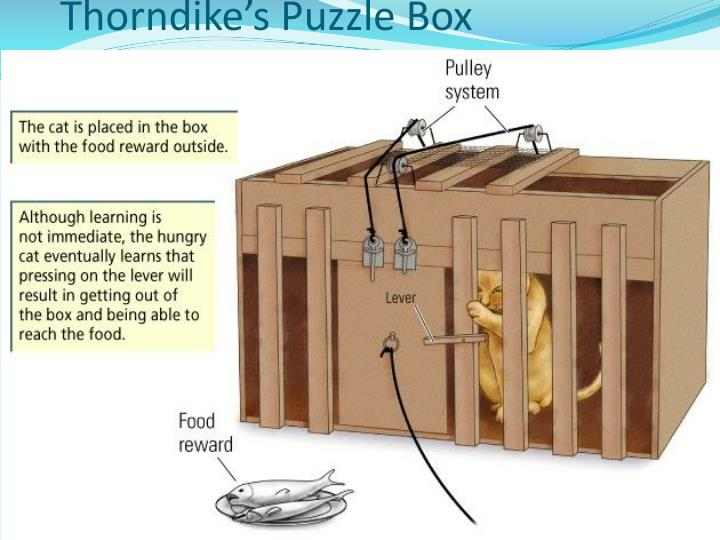 Thorndike's Puzzle Box