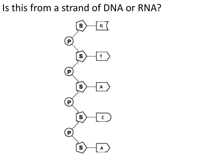 Is this from a strand of DNA or RNA?