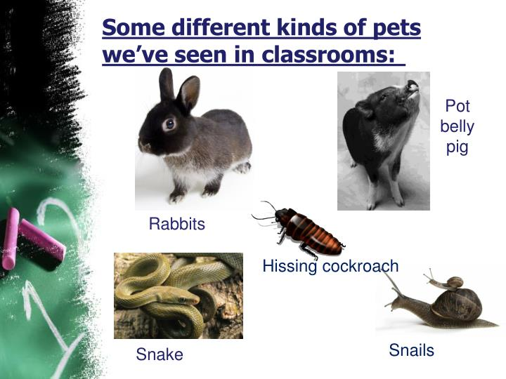 Some different kinds of pets we've seen in classrooms: