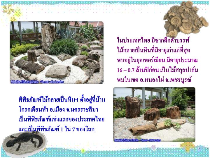 ในประเทศไทย มีซากดึกดำบรรพ์