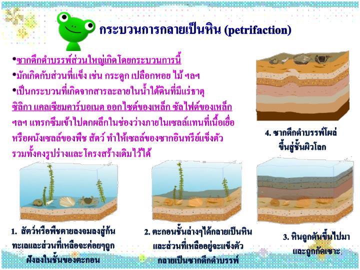 กระบวนการกลายเป็นหิน (