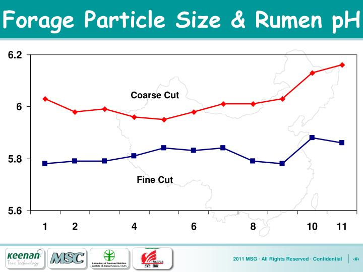 Forage Particle Size & Rumen pH
