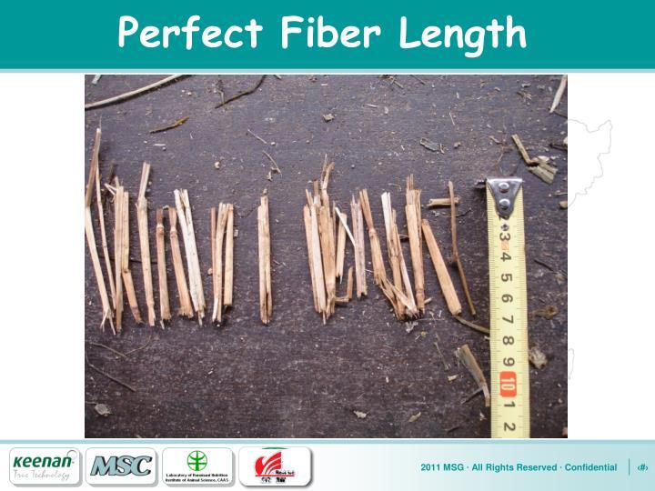 Perfect Fiber Length