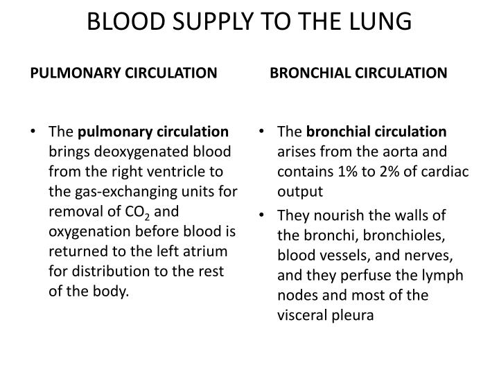 BLOOD SUPPLY TO THE LUNG