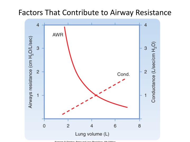Factors That Contribute to Airway Resistance