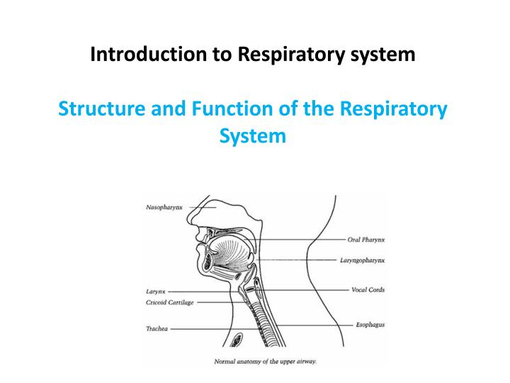 Introduction to respiratory system structure and function of the respiratory system