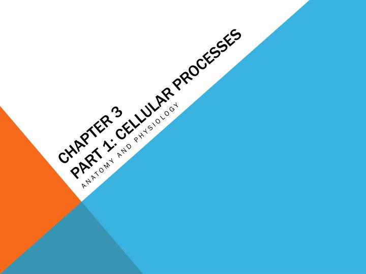 Chapter 3 part 1 cellular processes