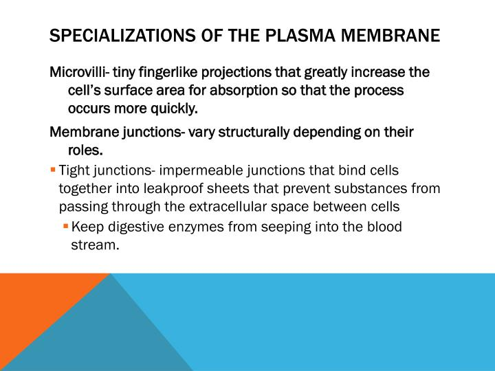 Specializations of the Plasma Membrane