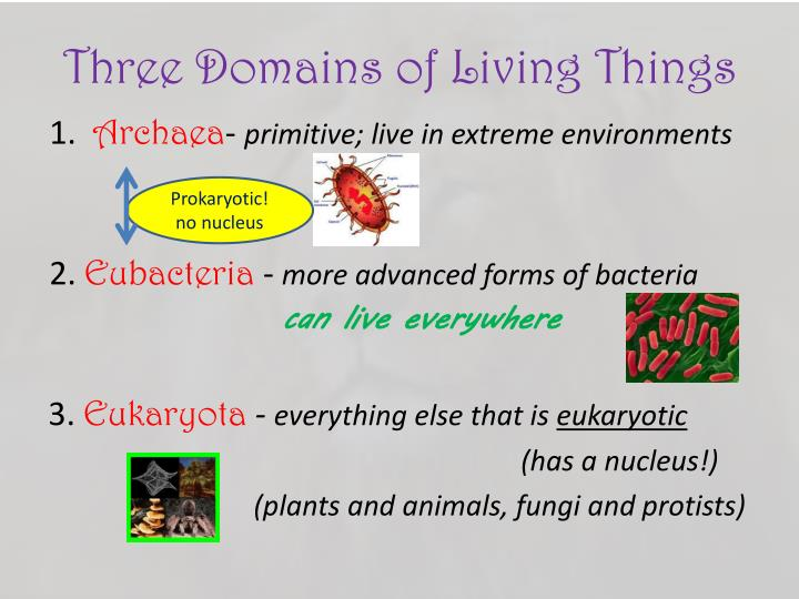 Three Domains of Living Things