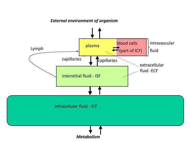 External environment of organism
