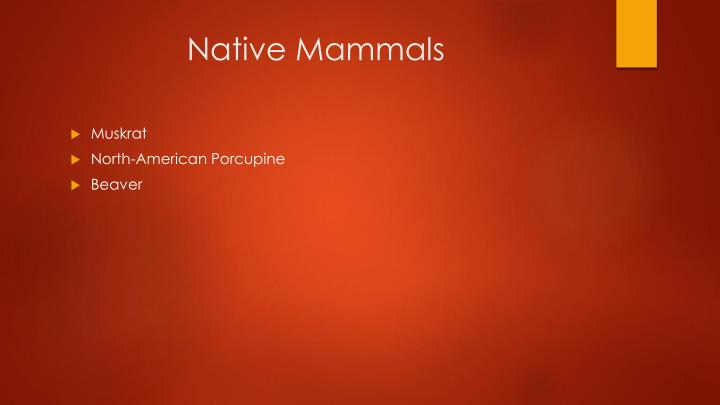 Native Mammals