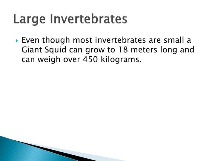Large Invertebrates