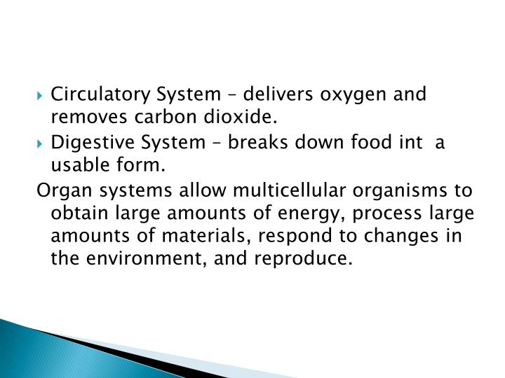 Circulatory System – delivers oxygen and removes carbon dioxide.