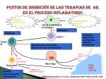 puntos de inhibici n de las terapias de ar en el proceso inflamatorio