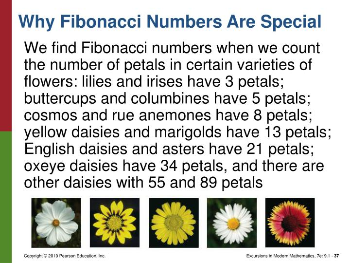 We find Fibonacci numbers when we count the number of petals in certain varieties