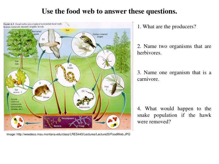 Image: http://weedeco.msu.montana.edu/class/LRES443/Lectures/Lecture20/FoodWeb.JPG