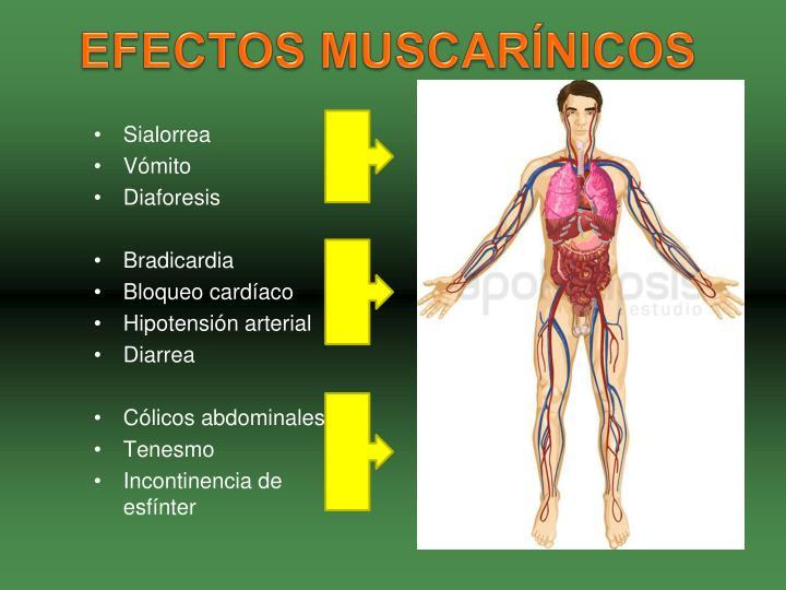 EFECTOS MUSCARÍNICOS