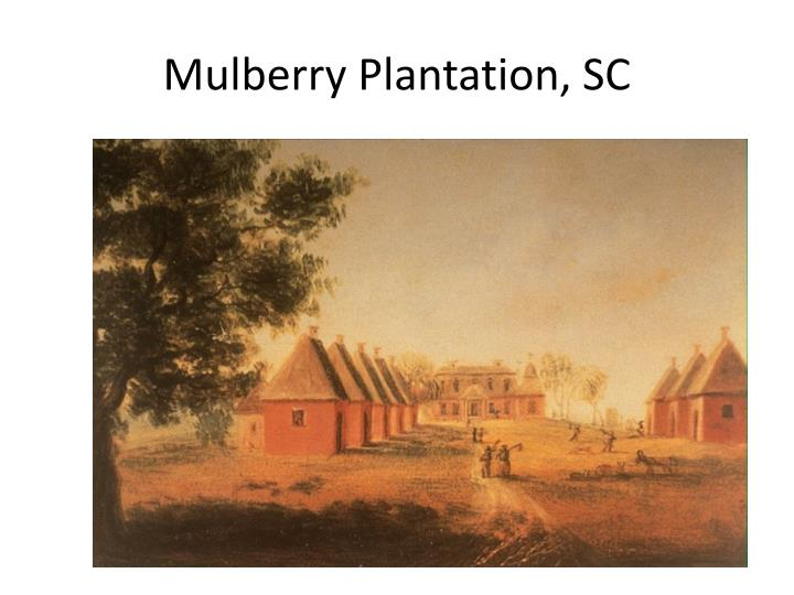Mulberry Plantation, SC