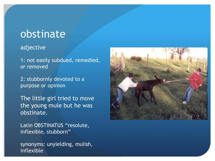 Obstinate